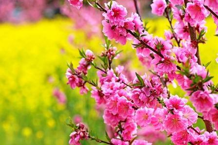 Весенние цветы за городом